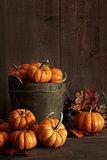 Miniature pumpkins on wooden table