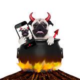 halloween selfie dog