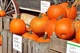 Pumpkins For Sale at an outdoor Farmer's Market