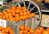 Pie Pumpkins For Sale at an outdoor Farmer's Market