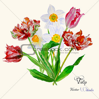 Bouquet of tulips and narcissuses-04