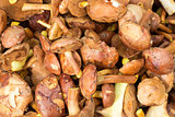Jersey cow mushrooms background