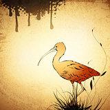 Vintage Eudocimus ruber or Red Ibis