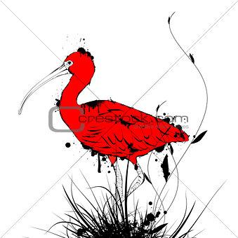 Grunge Eudocimus ruber or Red Ibis