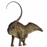 Amargasaurus Dinosaur Tail