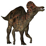 Corythosaurus Duck-billed Dinosaur