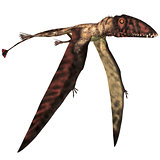 Dimorphodon in Flight
