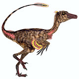 Troodon Dinosaur Profile