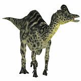 Velafrons Hadrosaur Dinosaur