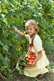 Happy young girl picking cucumbers in the summer garden