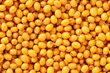 Orange sea buckthorn background