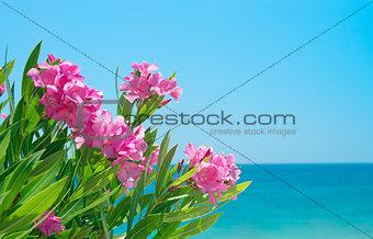 Oleander flowers and sea