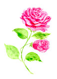 Hand drawn Rose. Vector illustration for greeting cards, invitations, other printing and web projects