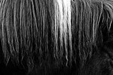 Horsehair b&w close up