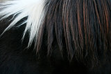 Horsehair close up