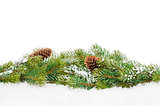 Christmas fir tree with snow