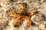 Starfish at low tide.