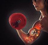 Gear muscles