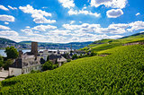 Green fresh vineyard near Ruedesheim, Rheinland-Pfalz, Germany