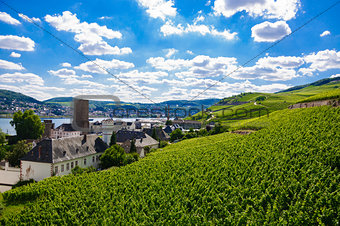 Green fresh vineyard near Ruedesheim, Rheinland-Pfalz, Germany