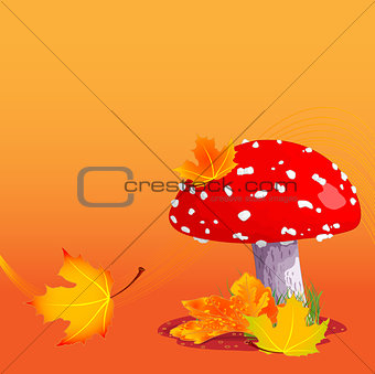 Autumn Amanita