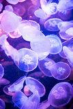 Jellyfish on the dark background