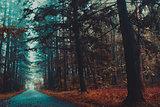 Gloomy autumn forest , depression , leaves