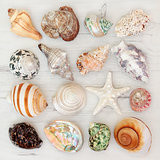 Sea Shell Beauties
