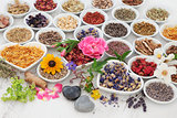 Therapeutic Herbs and Flowers
