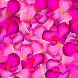 Rose Petals Background Vector Illustration