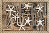 Starfish and Driftwood