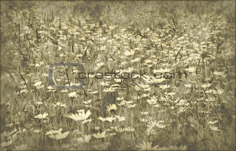 grunge field of daisies