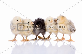 Five chicks in a row