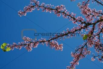 sky spring