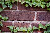 Brick and Ivy