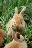 bunny meal