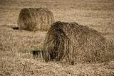 two hayricks on the country
