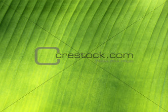 beautiful green palm leaf