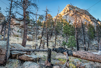Greyrock and forest after wildfire
