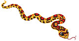 cartoon corn snake