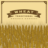 Retro wheat harvest card