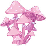 Magic Toadstools