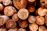Wood, pile of firewood, forest