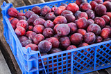 Fresh ripe red plums