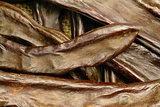 Carobs Close-up