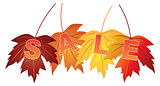 Sale Text on Fall Colors Maple Leaves