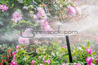 water sprinkler in flower garden