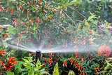 water sprinkler in flower garden