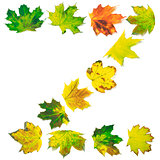 Letter Z composed of multicolor maple leafs