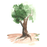 Romantic watercolor tree with green foliage on brown trunk